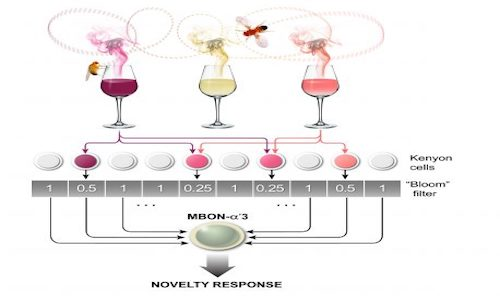 An image of flies buzzing around glasses of wine illustrates how flies detect novel odors.